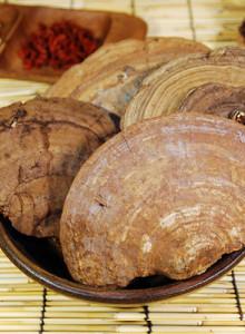 덕다리버섯 잔나비걸상버섯(국내산 1kg) - 설악이 주는 선물!!