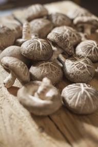 [특가][산지직송] 제주 표고버섯 1kg 가정용/ 말린 표고/ 건조 표고/표고 가루