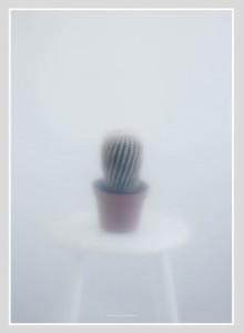 Kristina Dam Studio Ball Cactus-II Poster, 북유럽인테리어포스터