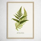 [파블로랩] 북유럽 식물 인테리어 포스터 액자 Fern Leaf no.01