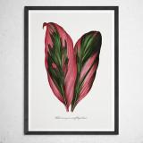 [파블로랩] 북유럽 식물 인테리어 그림 액자 Tropical Leaf no.02
