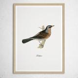 [파블로랩] 북유럽 빈티지 인테리어 그림 액자 Fieldfare Bird