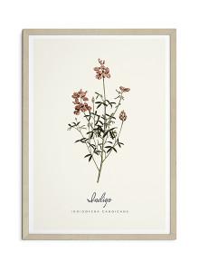 """유럽산 우드프레임 포스터 원목액자 - Botanical Flower """"Indigo"""""""