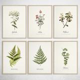 유럽산 우드프레임 포스터 원목액자 - 식물 액자 BEST