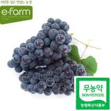 [이팜] 무농약 캠벨 포도(특)2kg