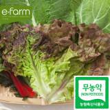 [이팜] 적상추(150g)(무농약이상)