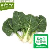 [이팜] 근대(300g)(무농약이상)