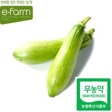 [이팜] 애호박(1EA)(무농약이상)
