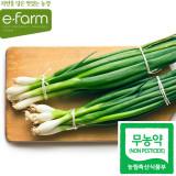 [이팜] 무농약 깐쪽파(800g내외)
