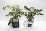 GRATO 해피트리 미니화분 / 공기정화식물
