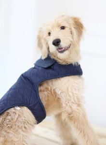 NEW 보듬옷 퀼트   강형욱 훈련사 사용 제품   보듬에서 제작한 반려견에게 편안한 옷