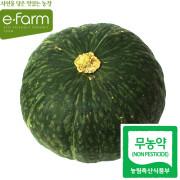 [이팜] 무농약 단호박(800g이상)