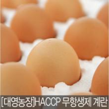 계란 특란 40알 친환경 무항생제 인증 대영농장