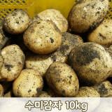 [다드림농장]수미감자 10kg