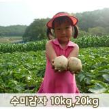 [젊은농부]포슬포슬 햇감자 10kg,20kg