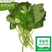 [이팜] 무농약 호박잎(200g내외)