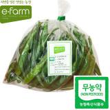 [이팜] 무농약 오이맛고추(1kg)