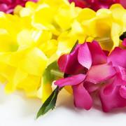 퍼플옐로우 레이 Lei 하와이 꽃목걸이 훌라용품 /우쿨렐레 악세사리 훌라댄스