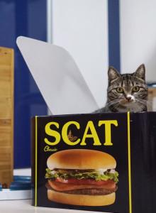 -스크래치상품- 골골캔하우스 스캣 고양이 스크래쳐 하우스