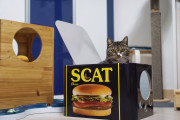 골골캔하우스 스캣 고양이 스크래쳐 하우스