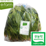 [이팜] 무농약 섬초 시금치 (1kg)