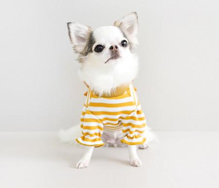강아지옷/스트라이프 리본 니트- 머스타드