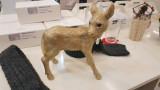 Coinbank deer gold / 사슴 저금통