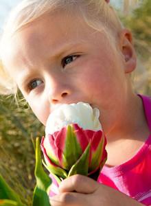 오레인보우아이스크림 튤립구근 5개 정원꾸미기